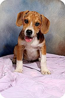 Pin By Pam Ogletree On I Love Dogs Pets Dogs Terrier Mix