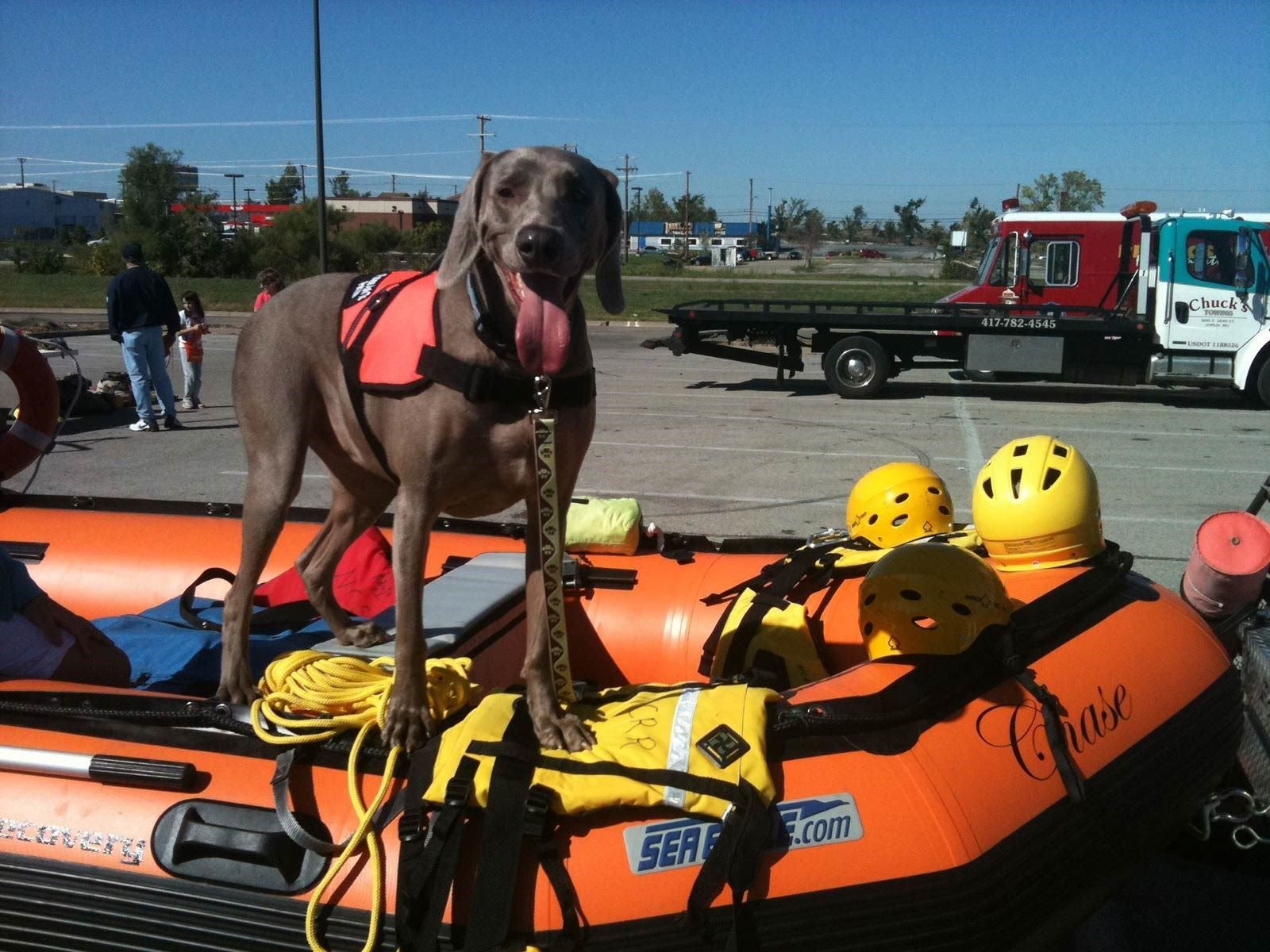 Lily Was One Of Many Search And Rescue Dogs To Sift Through Rubble
