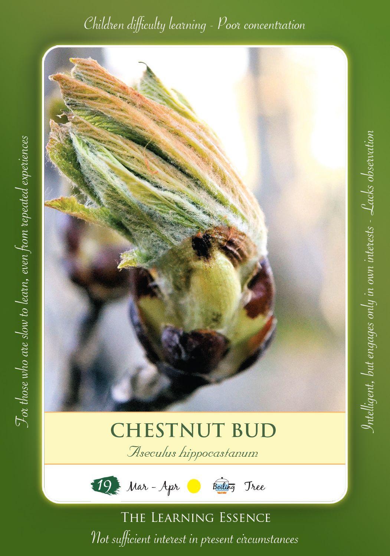 Bach Flower Remedy Chestnut Bud Toke Pinterest Chestnut Bud