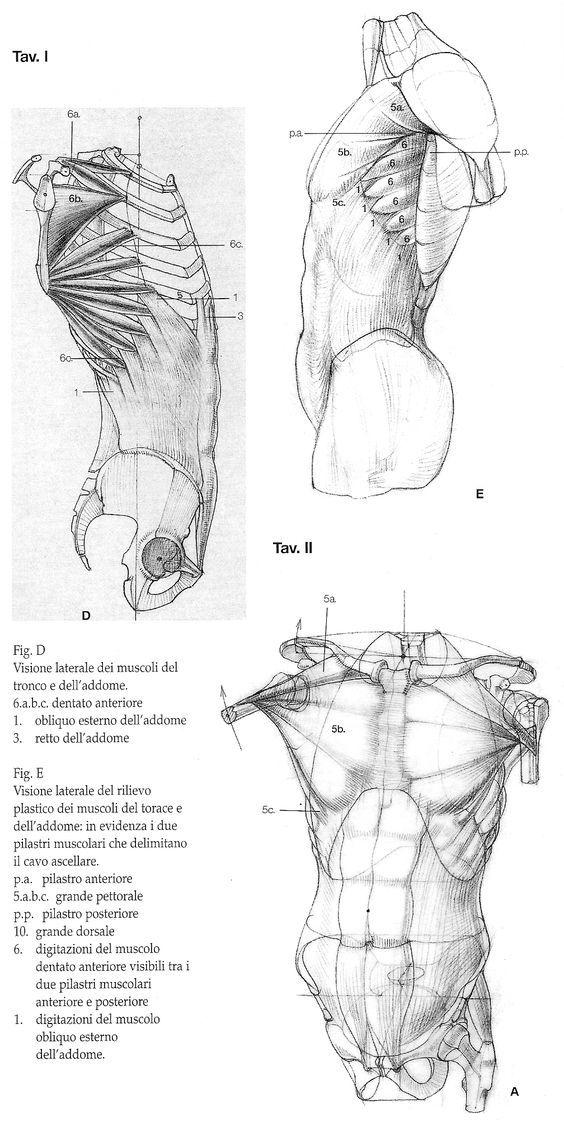 Karakalem Anatomi Model Çizimleri