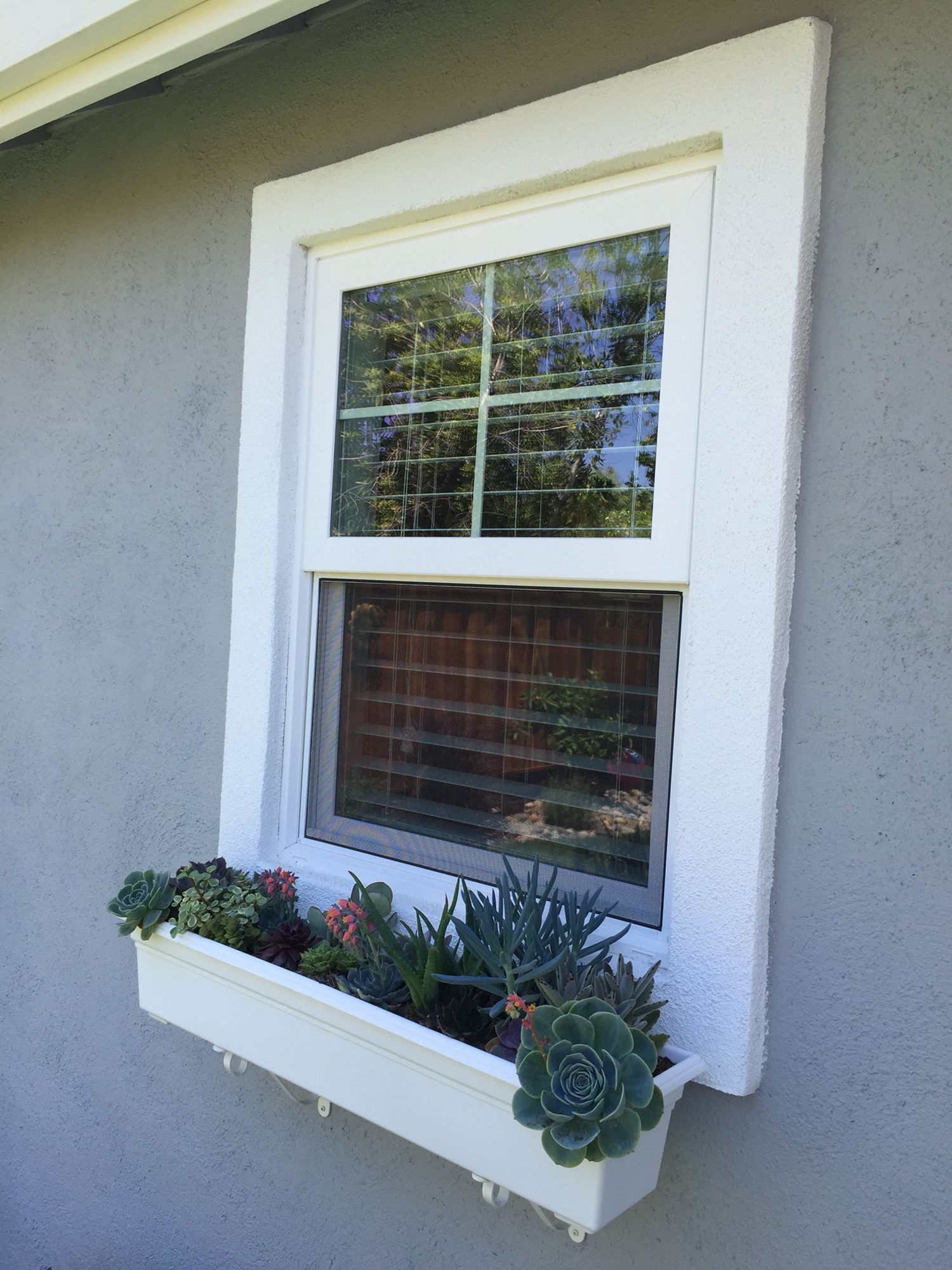Window box full of succulents... Perfect for our California drought :-)