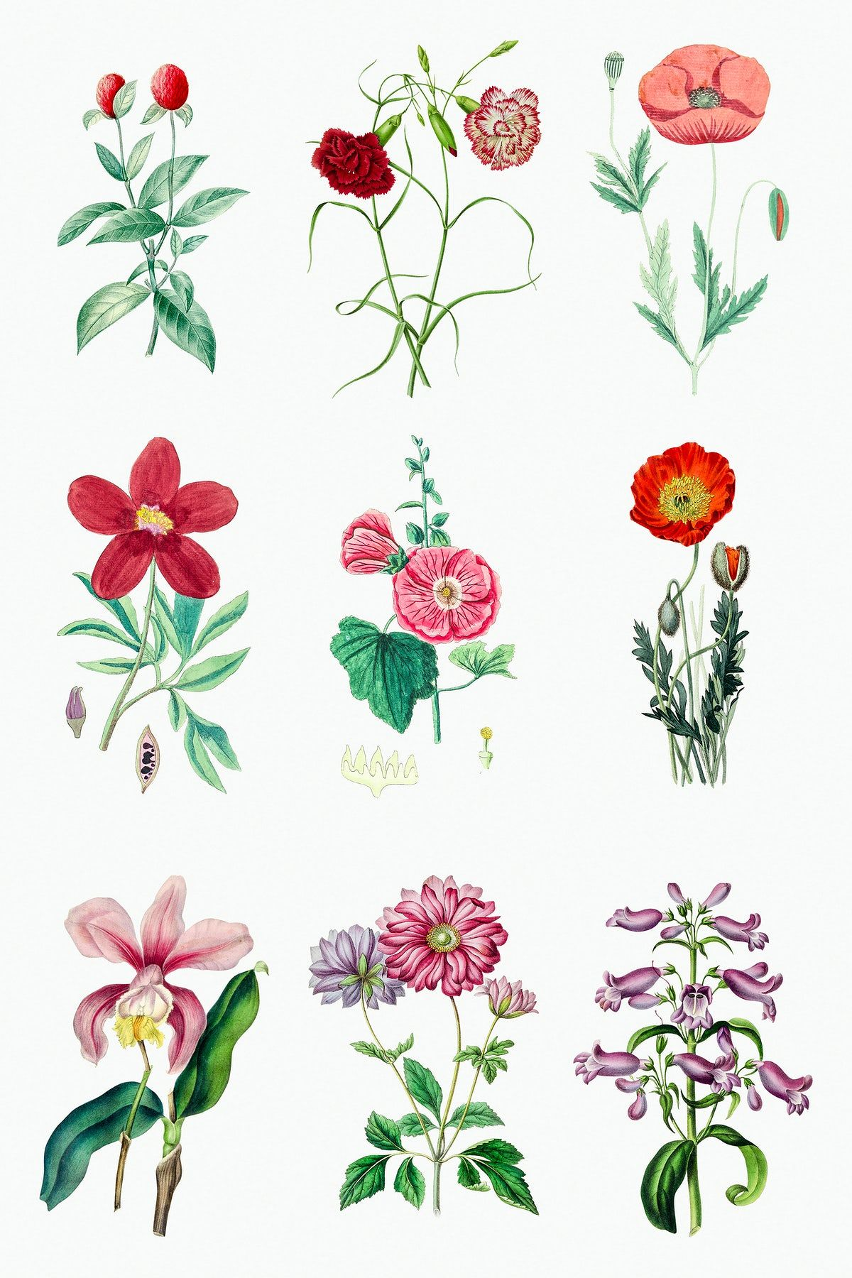Vintage Tropical Flower Design Element Set Premium Image By Rawpixel Com In 2020 Design Element Sticker Design Tropical Flowers
