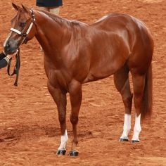 Now is the time to start preparing for a sleek, glossy coat that will turn heads in the show ring. Chances are your horse has started shedding, but he probably still has remnants of his fluffy winter coat. Here are some things you can do to help your horse develop a beautiful coat for the show ring.