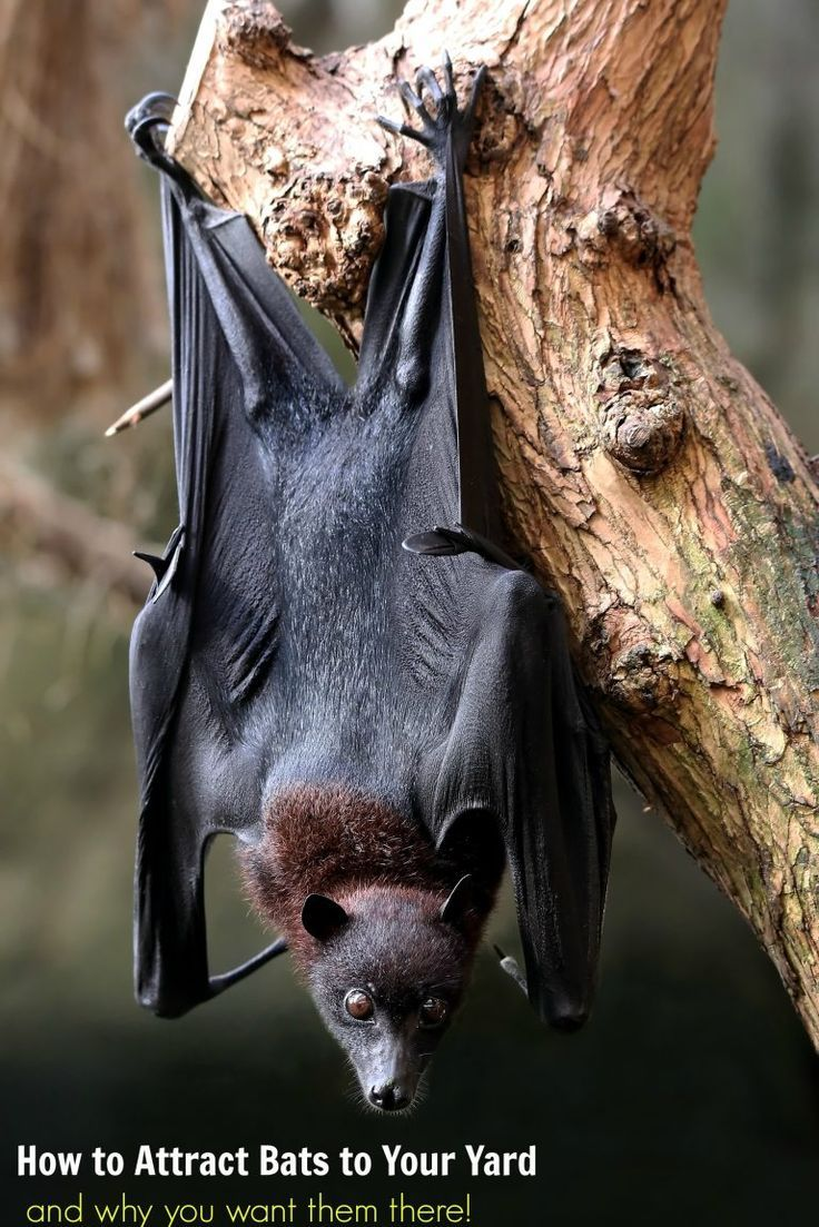 How to Attract Bats to Your Yard and Why You Want Them