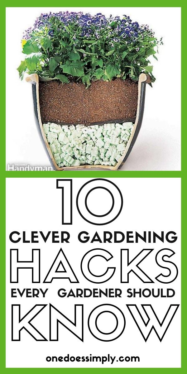10 Brilliant Gardening Hacks You Should Try to Be A Gardening Genius is part of Gardening tips, Garden care, Diy garden decor, Roses garden care, Diy garden projects, Garden containers - Are you tired of seeing your flower plants that refuse to grow  Are you tired of those messy drips whenever you water your indoor plants  Are you tired of expensive fertilizers that bring no significant result  Hey! You need to try these genius gardening tips today!