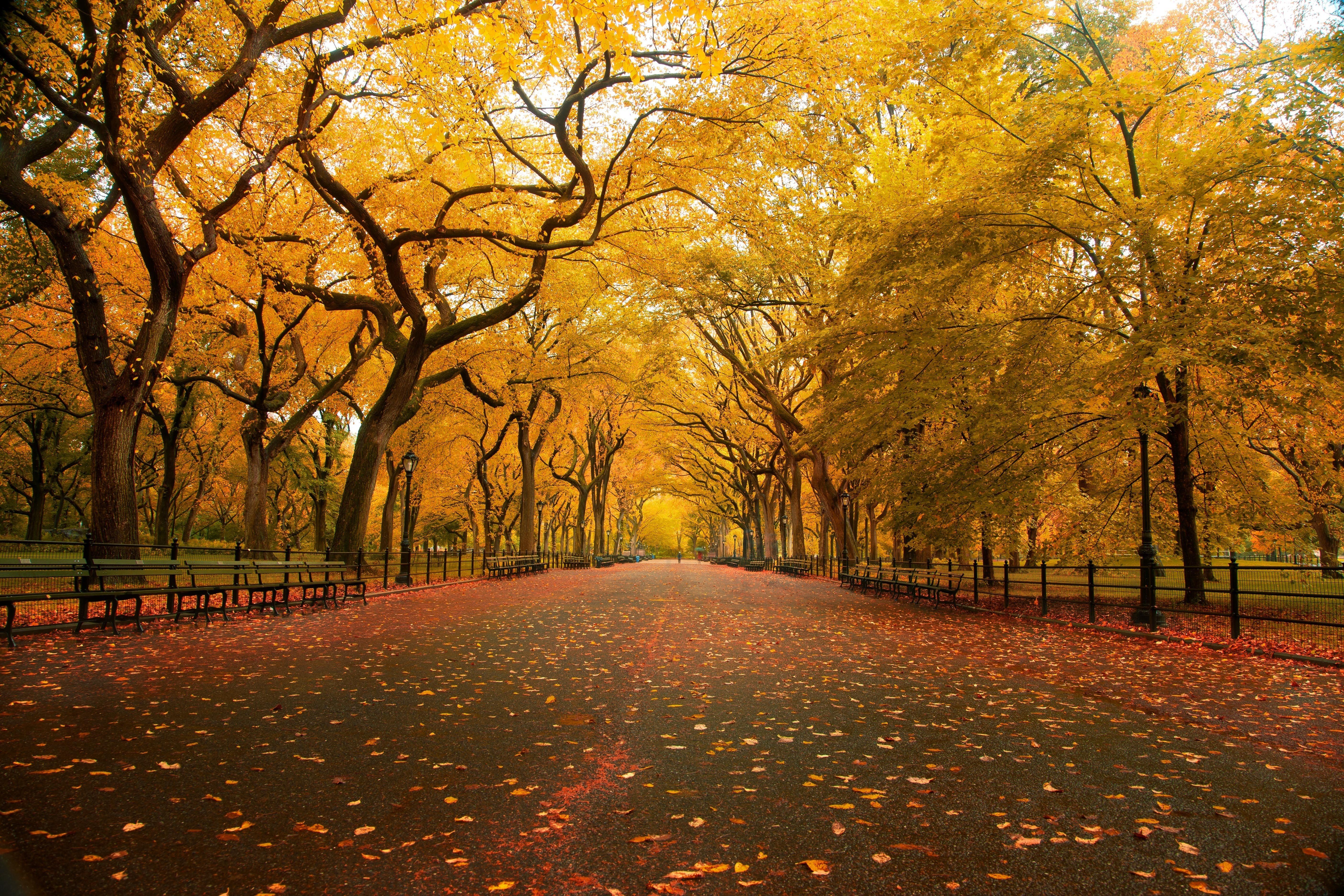 Autumn Fall Tree Forest Landscape Nature Leaves Wallpaper Forest Landscape Landscape Nature Backgrounds