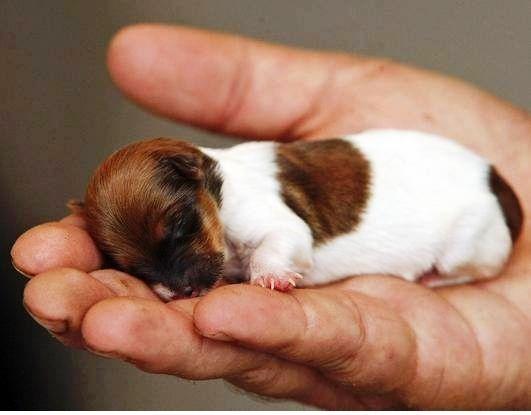 Mama Is Adoring Her Newborn Baby Bulldogs Cute Little Puppies