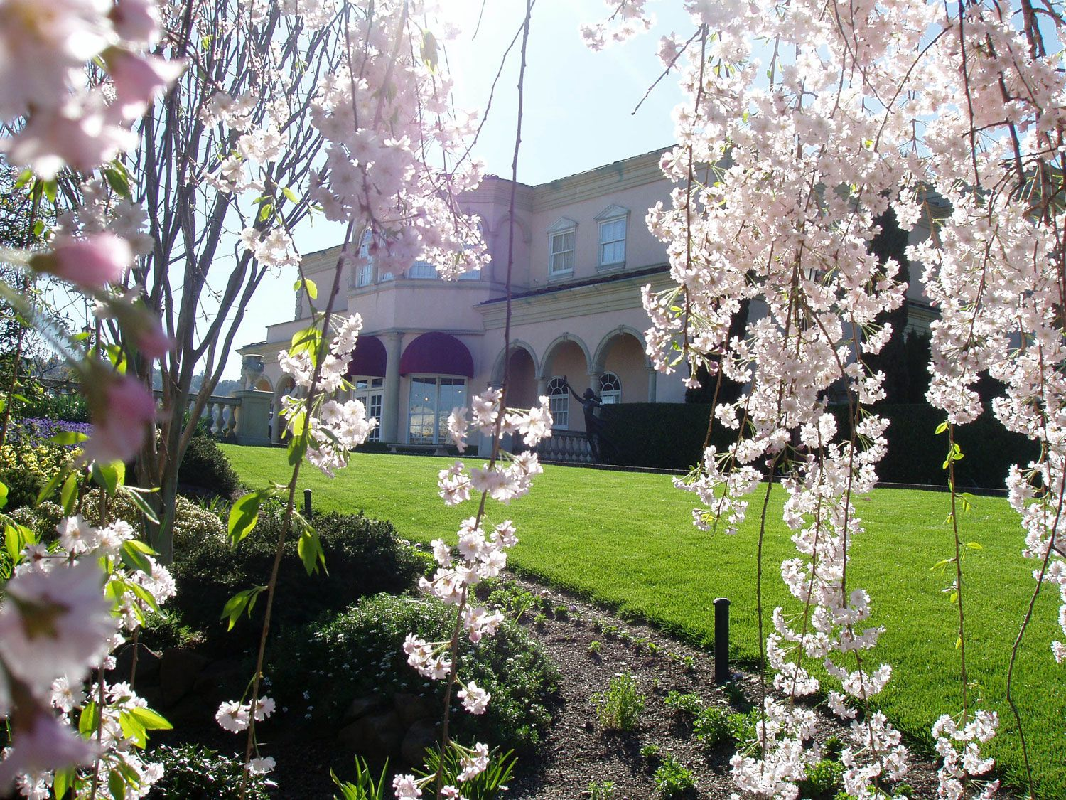 Spring in bloom at Ferrari,Carano Vineyards and Winery. Dry