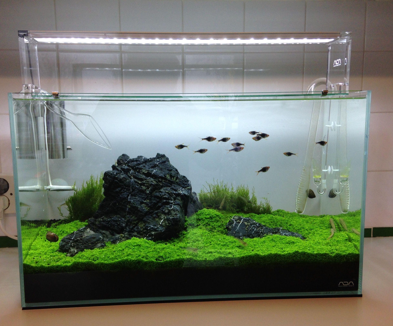 f25546aa25fe95e80bcb9fe46c08ddcd Frais De Aquarium tortue Aquatique Schème