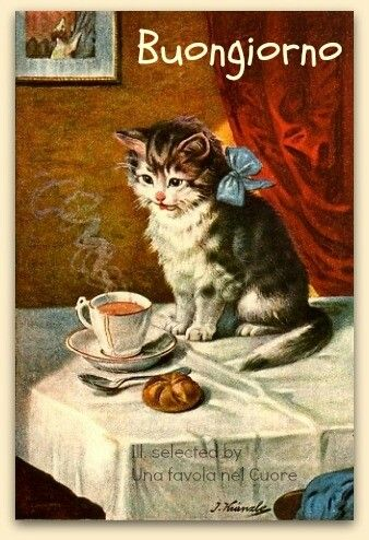 Buongiorno Cat S Pinterest Vintage Cat And Cat