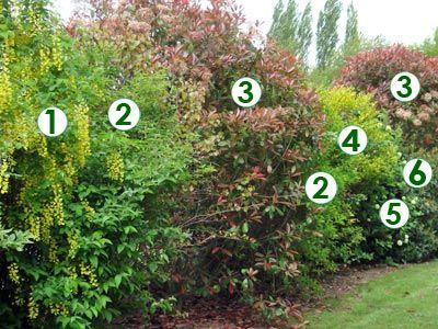 Une haie champêtre très décorative (Scènes de jardins) | Idée pour ...