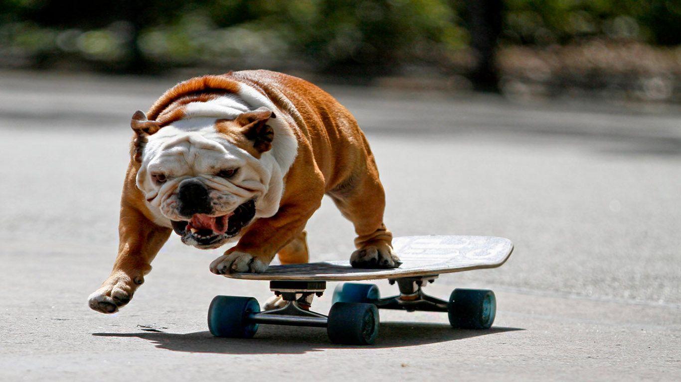 11 animals doing human activities cool dog tricks dogs