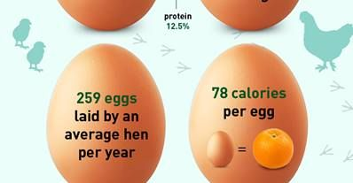 http://www.fitnesshashtag.com/img/65/egg-cellent-facts-healthy-fitness-protein-calories-fat-vitamin/