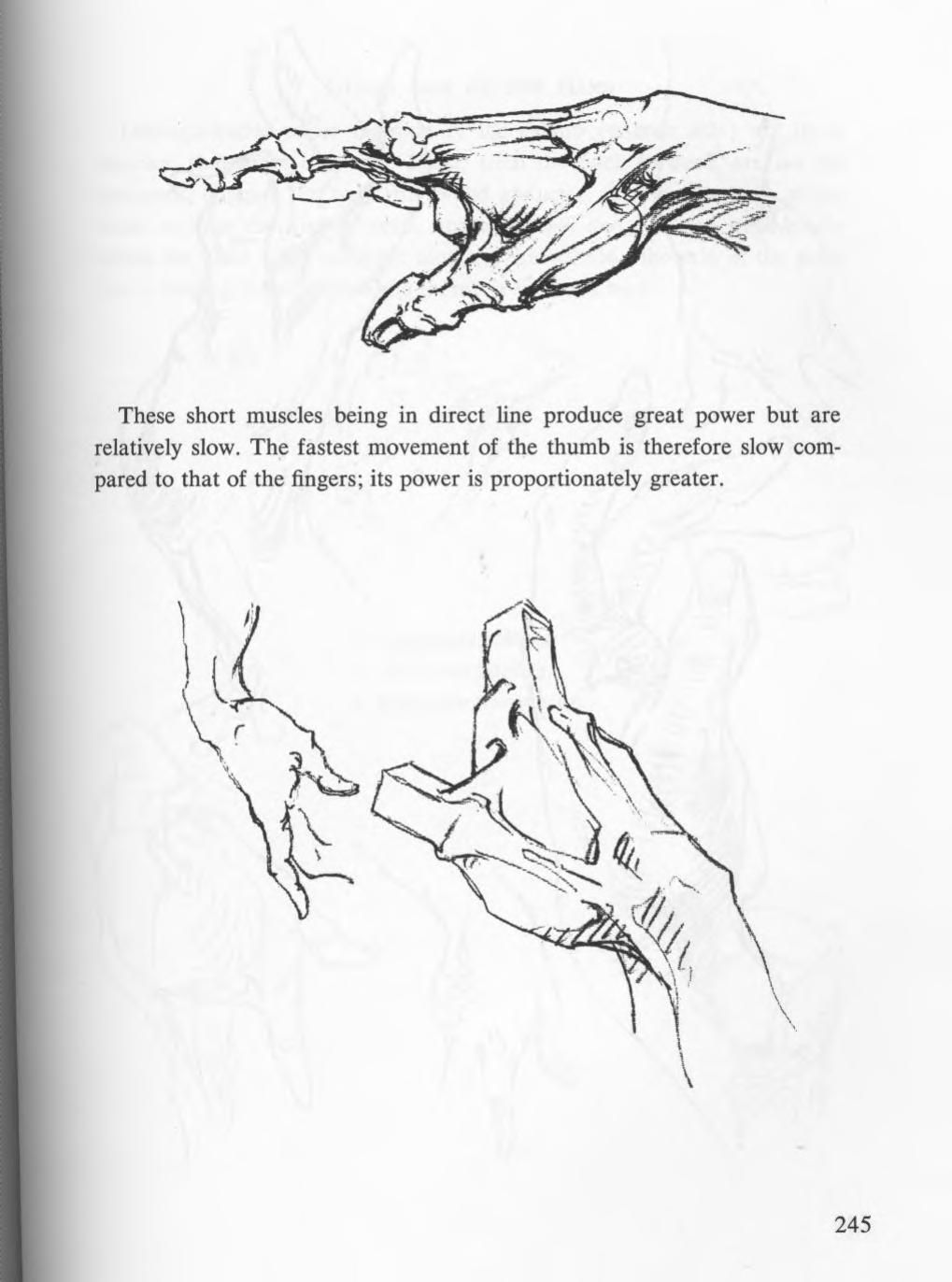 Bridgman Complete Guide To Drawing From Life Anatomy