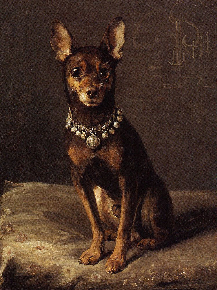 Details About English Toy Terrier Black Tan Charming Dog