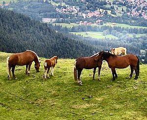 »»» Krafttier Pferd: Als der Mensch das erste Pferd zähmte, anstatt es zu...    #krafttiere