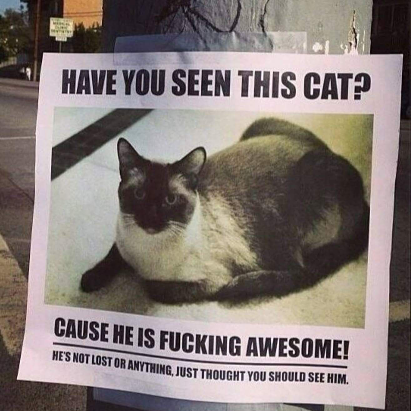 Pin by Jill Byrne Murphy on Caturday LOLCats Missing cat