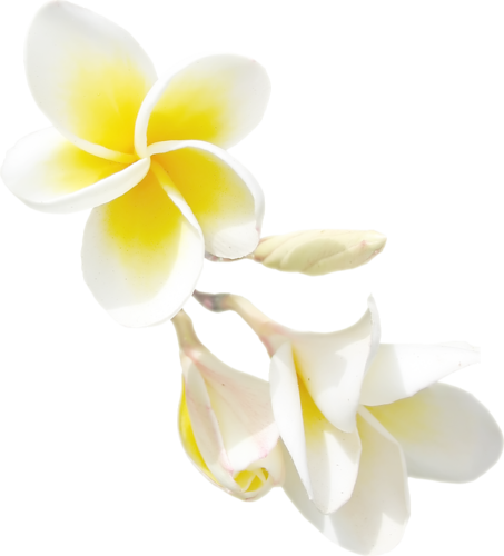 Exotic Flowers (10).png