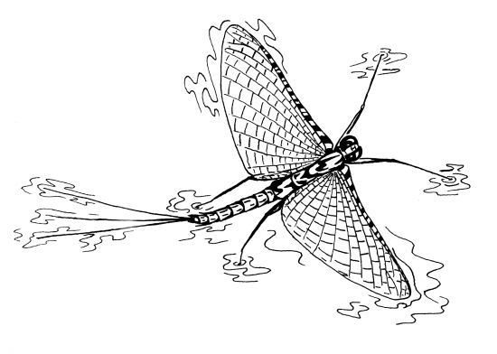 mayfly tattoos so for this fly friday take the time to appreciate the lowly mayfly
