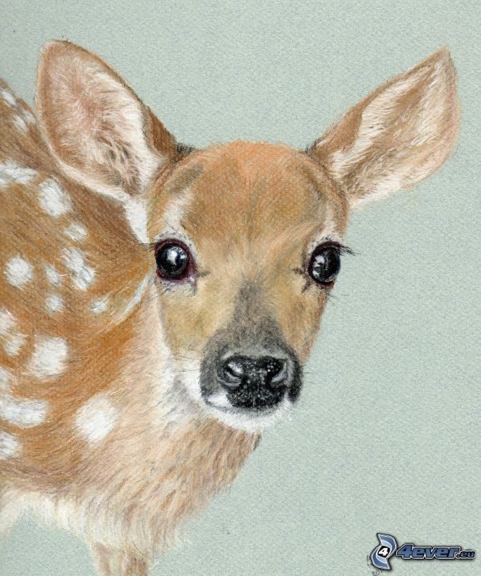Pin Von Tammy Collatz Auf Animals Drawings Painting Und Animal