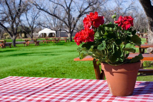 Picnic Table With Centerpiece Baby Shower Pinterest