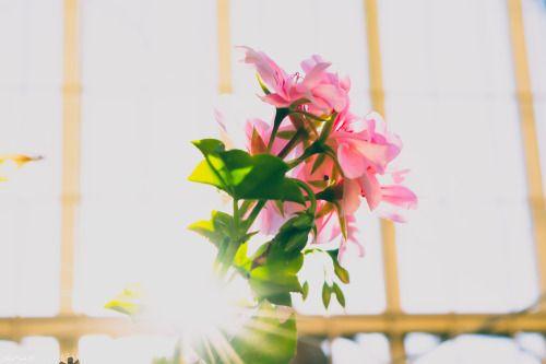 diegojpradof:  Flores. Más que colores  │Momentos Fotografía │Instagram  │@lachicamisteriosa29