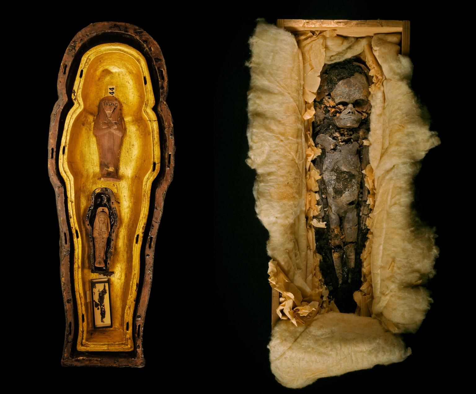 The Curse Of King Tuts Tomb Torrent: Photo Album: King Tut, Queen Nefertiti, And One Tangled