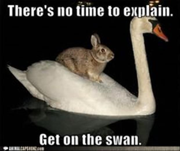 Dump A Day Attack Of The Funny Animals - 30 Pics Bunny on Swan