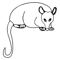 Top 10 Possum Opossum Coloring Pages For Your Kids Coloring