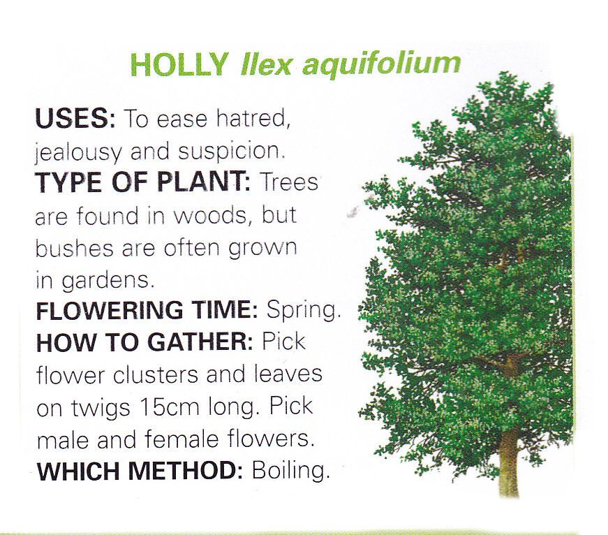 Holly uses and method
