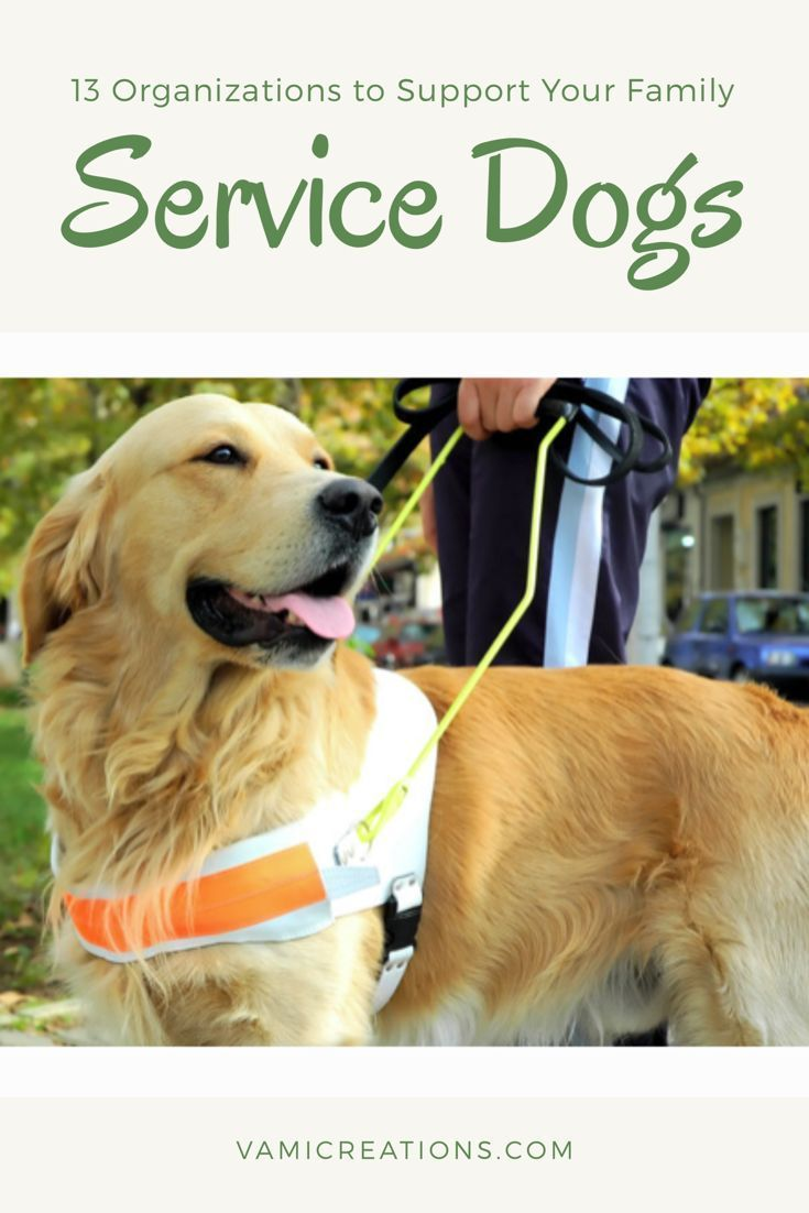 how to get a free service dog for epilepsy