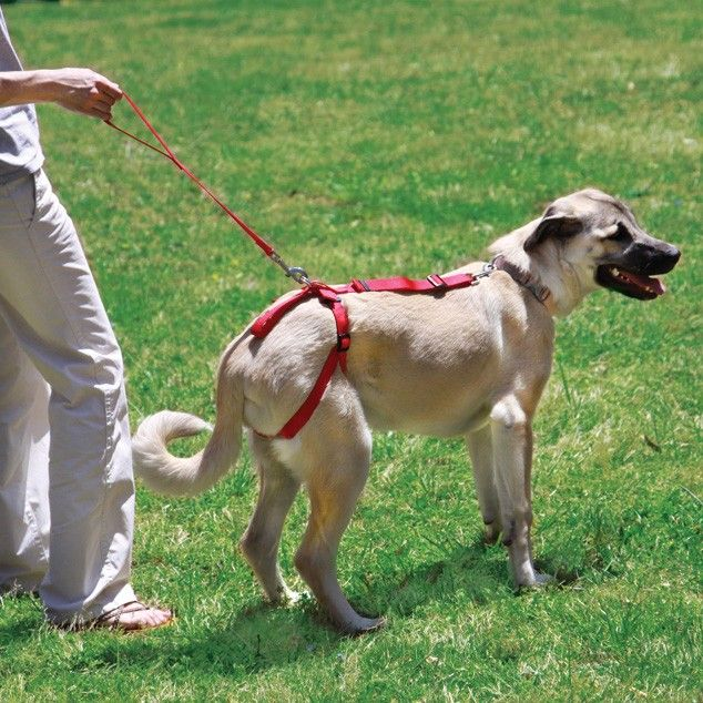 f25a3bf5f060ff2604bfff202ff6a057 bottoms up harness & leash for elderly dogs with bad back legs hip