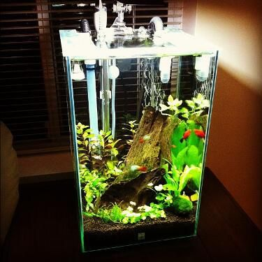 Fluval chi set up source fluval facebook page fabulous for Fluval chi fish tank