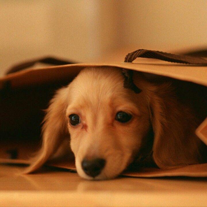 Pin By Ariyon Sierra On Lol Soo Cute Cute Puppies Animals Dogs