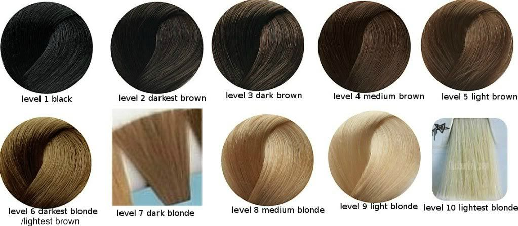 What Is Your Hair Color Level Hair Color Hair Color Chart Blonde Hair Color Chart
