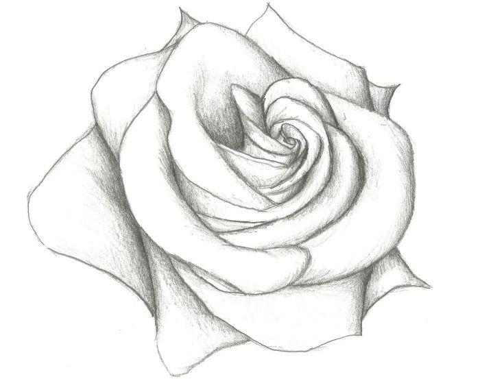 Croquis De Fleur Facile à Dessiner Modèle De Rose Au Crayon Blanc