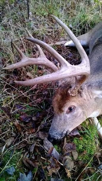 8 Point Buck Buckpole Pinterest Music Hunting And Film