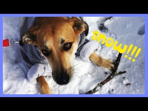 Try something new, Mishu! Funny dog video with Dear Mishu