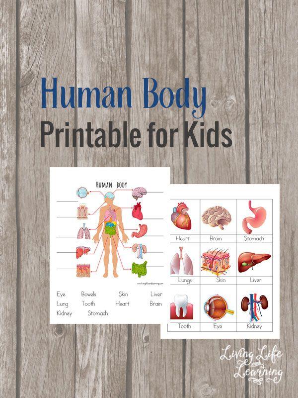Free Human Body Printable For Kids Educational Freebies