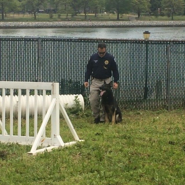 Watch the NYPD dogs taking agility to the next level.