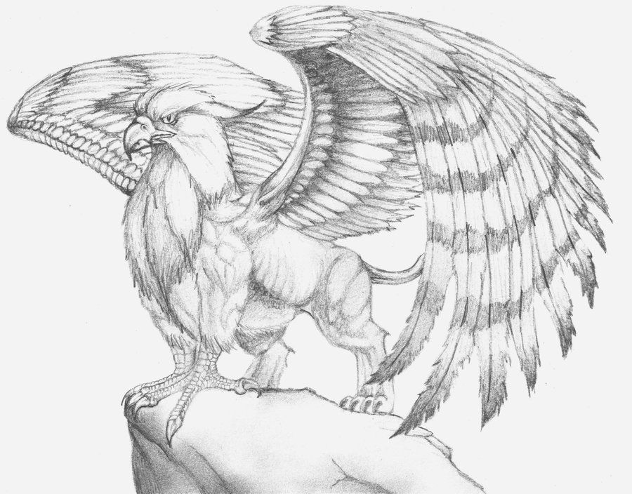 gryphon art | Gryphon by ~TwoPinkElephants on deviantART