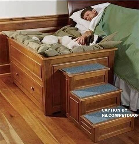 My Dog Would Never Sleep In A Dog Bed But It Still Would Be Cool To Have Indoor Dog House Designer Dog Beds Dog Bed