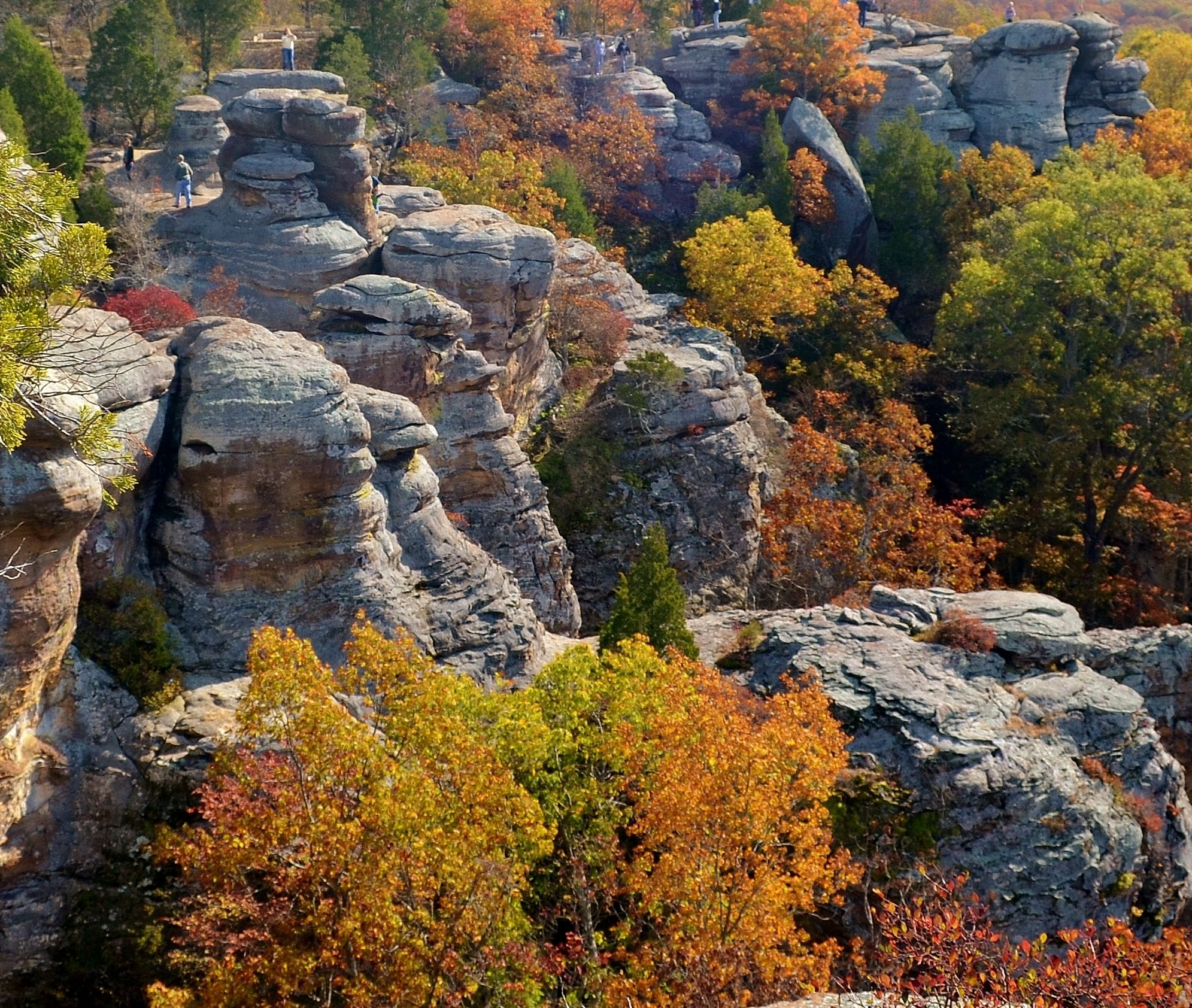 Fall Colors Garden Of The Gods Shawnee National Forest Illinois Shawnee National Forest National Parks Forest Falls