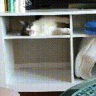 Theres nothing like a good shelf yawn
