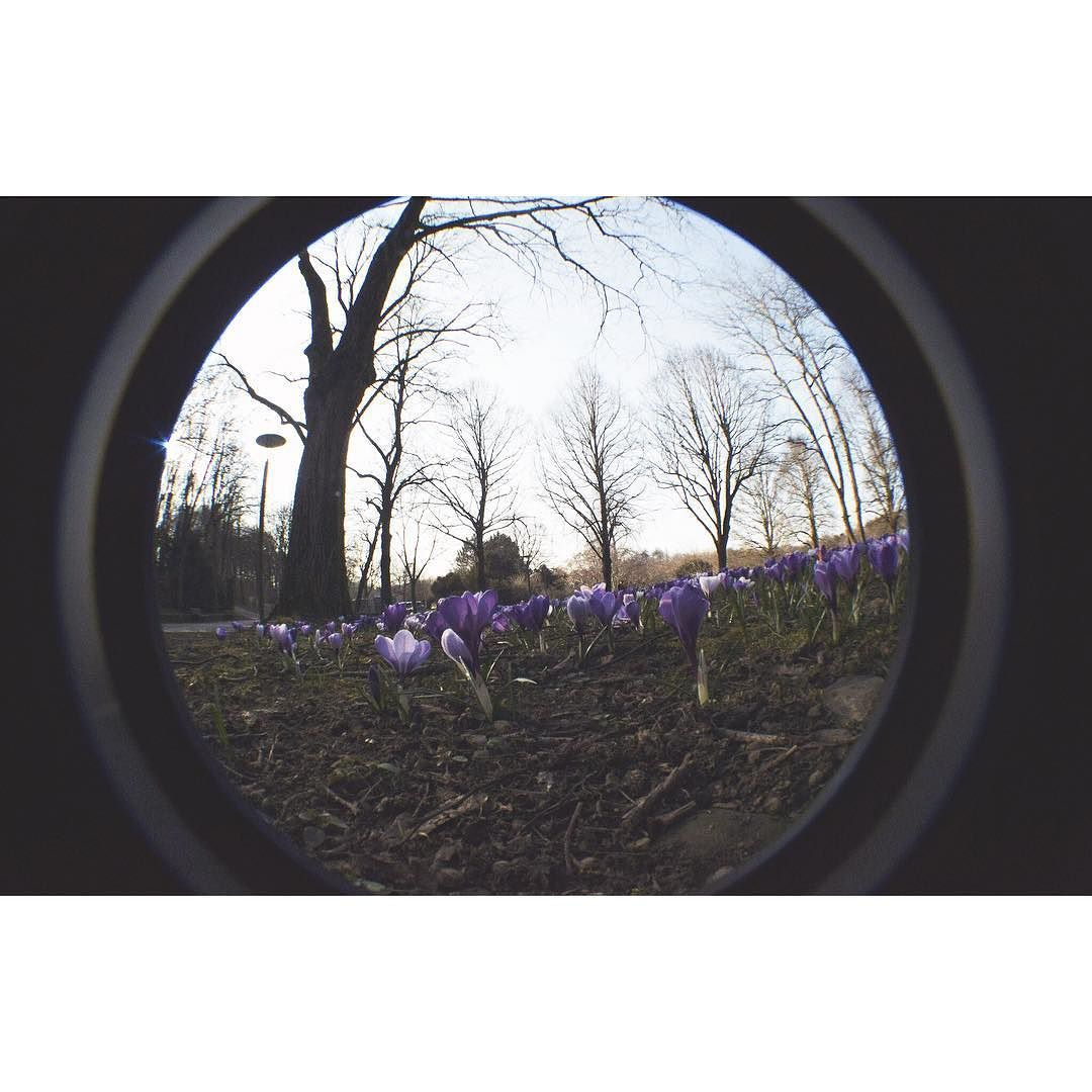 Gorgeous! shared by bloodystern #landscape #contratahotel (o) http://ift.tt/1Yp10tQ in Westpark  #westpark #münchen #flower #frühling #fisheye #backinthedays #flower #skyscape #view #memories #reflecting #happy #goodtime #munich #sun #sunnyday #circle #perspective #spring #trees #nature  #igers #igersdeutschland #deutchland