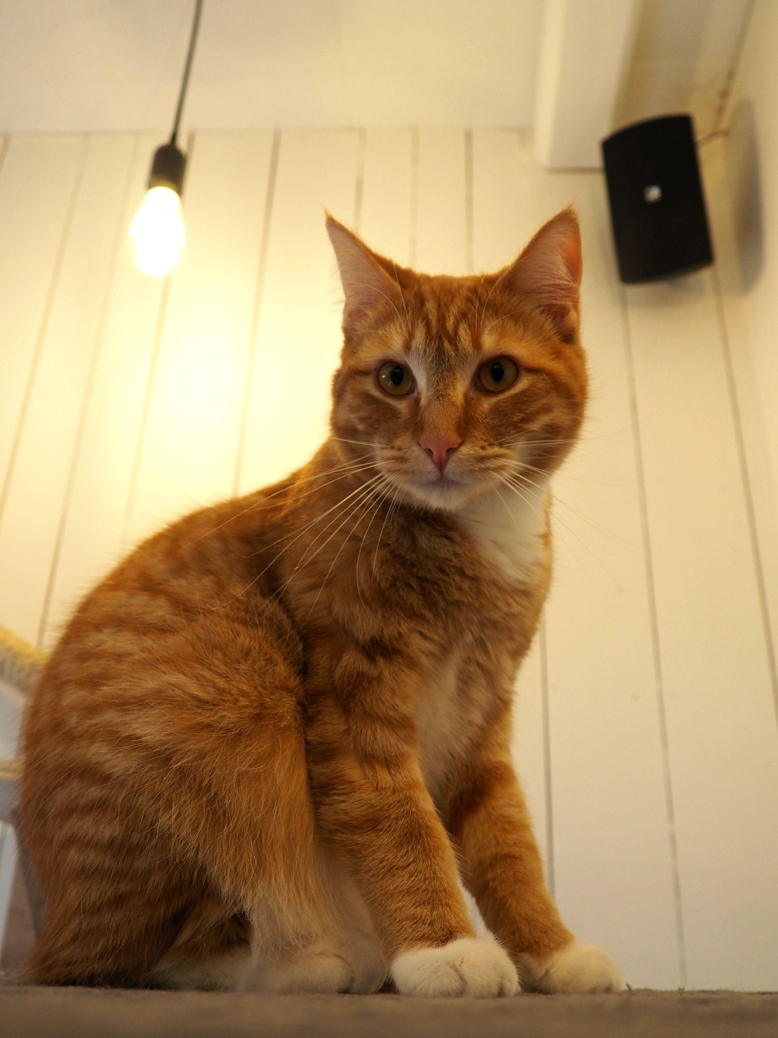 Cats from Kortrijk {Belgium}
