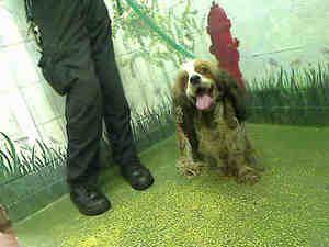 Rhett Is An Adoptable Cocker Spaniel Dog In Atlanta Ga Can Anyone Give Him A Loving Home Cocker Spaniel Dog Pets Dog Adoption