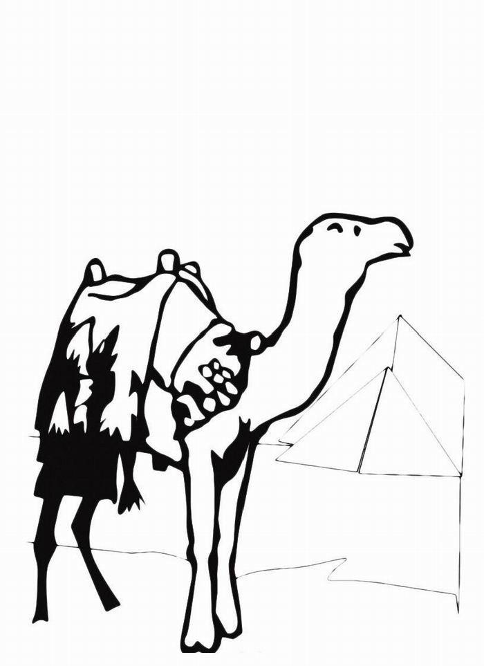 Раскраска Верблюд с одним горбом — картинка-разукрашка на ...