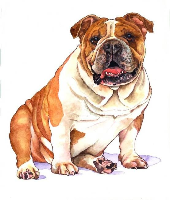 """B for Bulldog"" by Wendy Edelson English bulldog art"