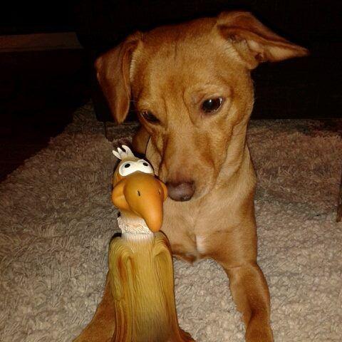Joni Pawshake Hunde Fotos Hundefotos Hund Und Katze